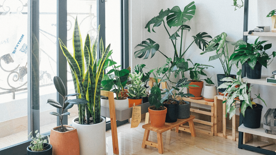Best air-purifying indoor plants