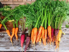Gardening ki pathsaala: How to grow carrots