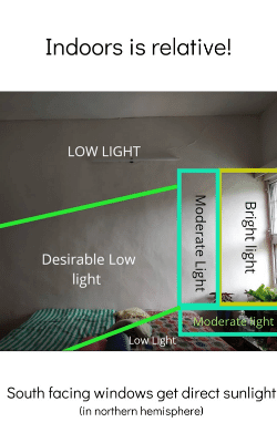 Indoor plants sunlight distribution by lazygardener
