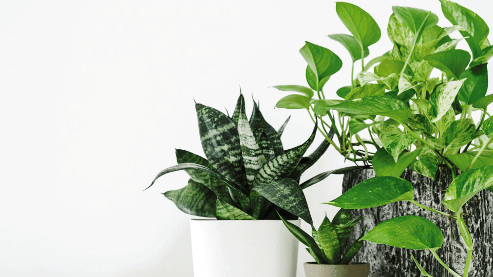 Best indoor non-flowering plants