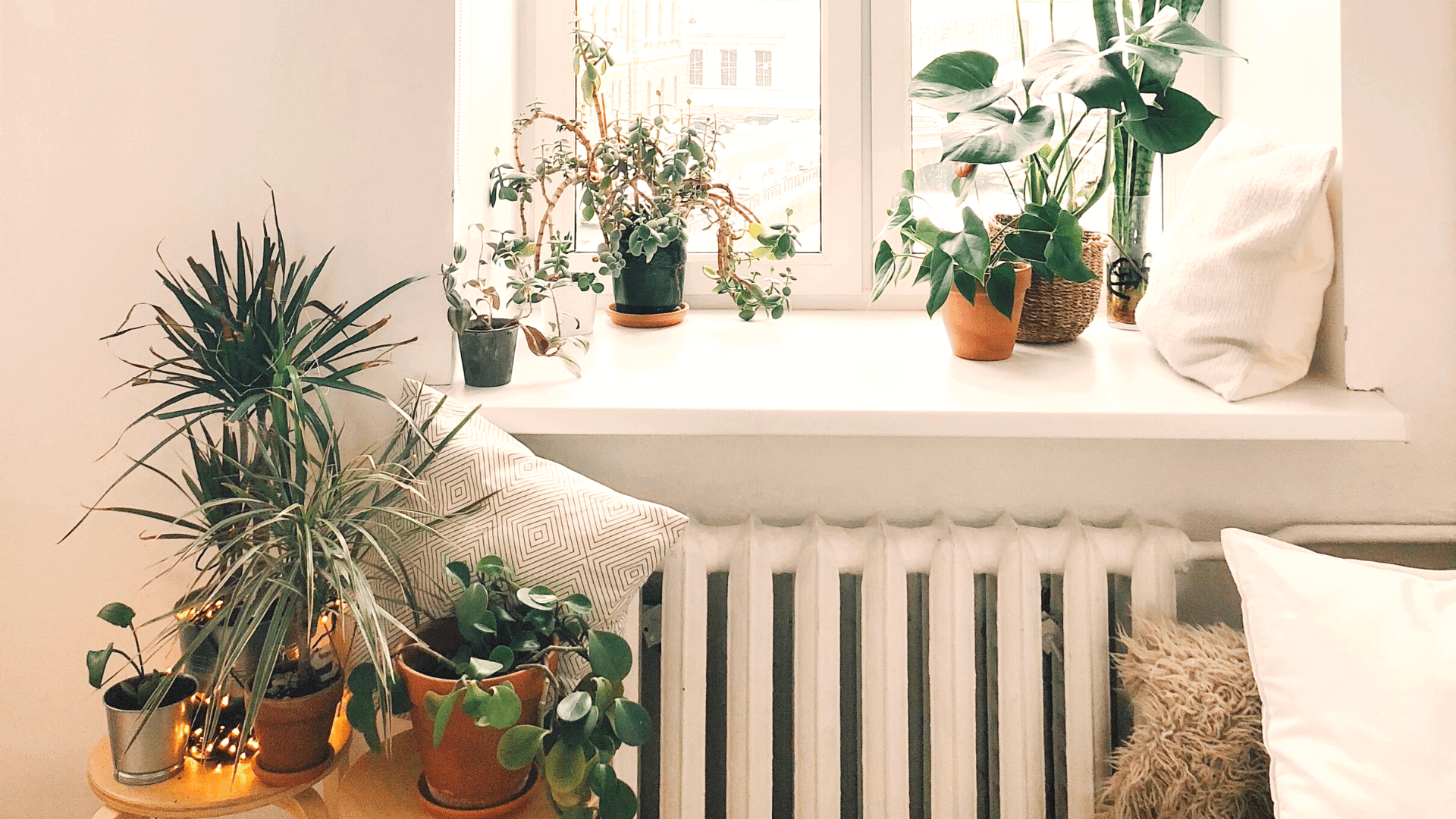 Best Indoor Plants for small space home/balcony