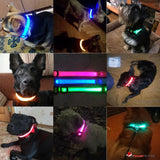 LED DOG COLLAR - ILLUMINATES YOUR DOG AT NIGHT TO HELP AVOID LOSS AND ACCIDENTS