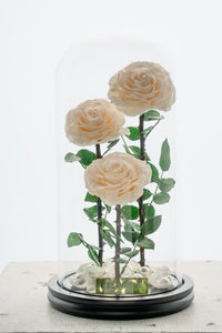 【パール付き】Beauty & The Beast  ‐ 3Roses ‐