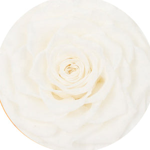 Beauty & The Beast  - Rose Bud S size -