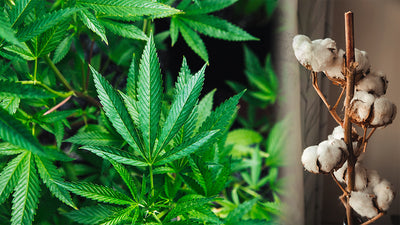 Hemp vs Cotton: Which One is Better and Why?