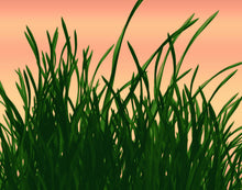 Load image into Gallery viewer, Green Grass
