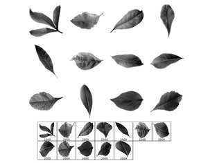 Leaf Photos
