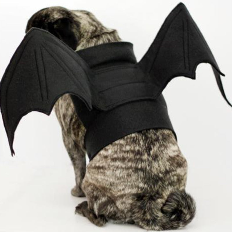 Funny Cosplay Bat Wings Spider Pet Dog - Aanvi's Store