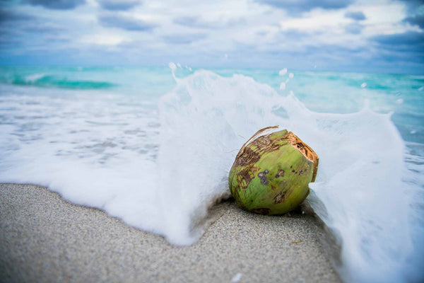 Voyaging Plants of Ancient Hawaiians: Niu (Coconut)
