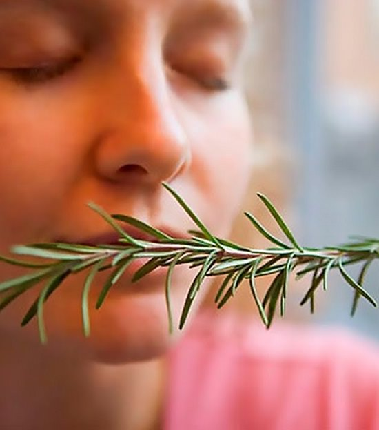 Miraculous benefits of Rosemary