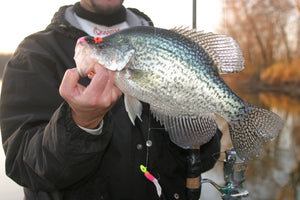 A Compass for Spring Crappies By Matt Straw