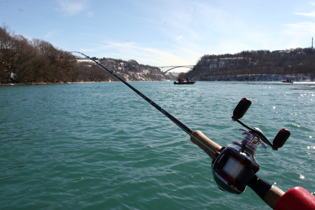 Niagara River Steelhead by Chris Shaffer