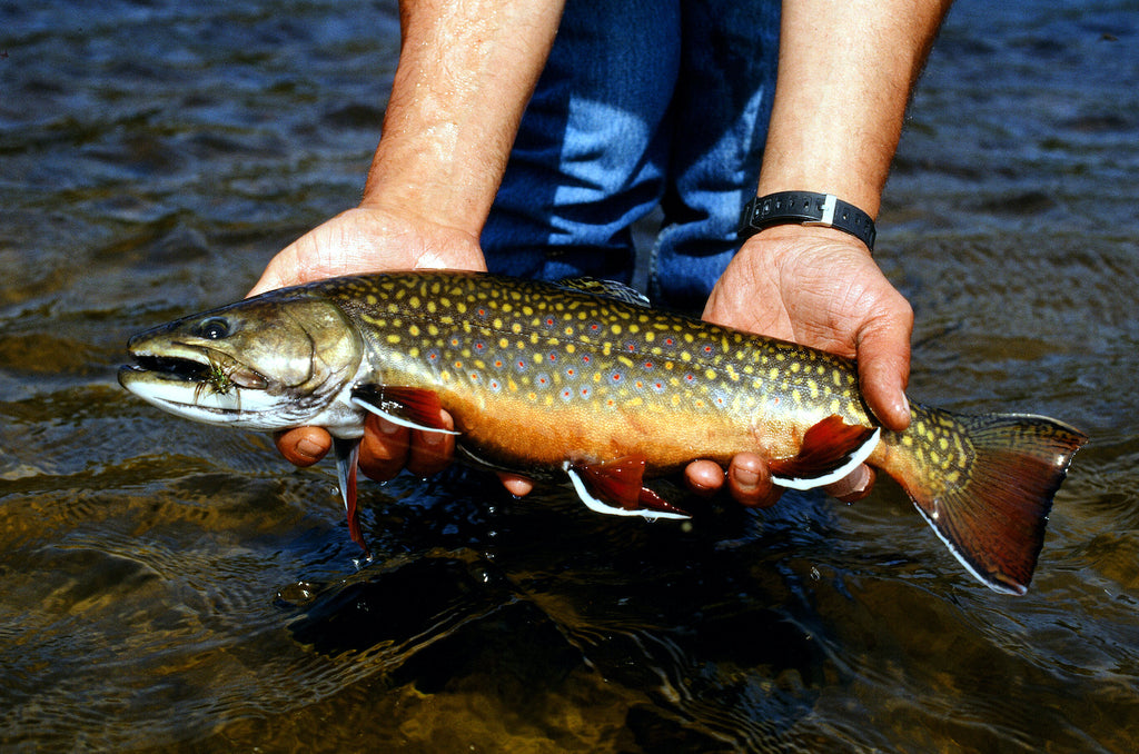 fish fishing fly trout stream creek river brookie brook