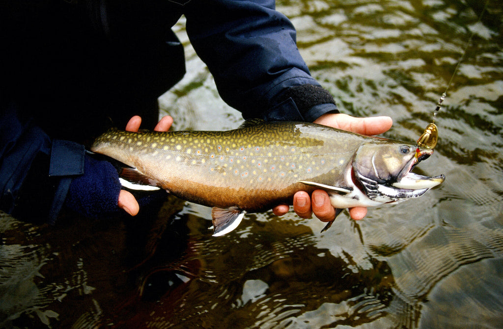 fish fishing fly trout stream creek river brown spinner