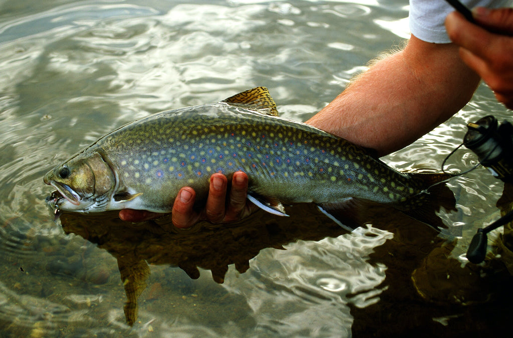 brook trout fishing fish fishing fly trout stream creek river