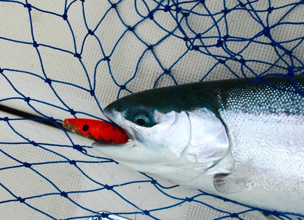 great lakes angler salmon trolling forum fishing website steelhead trout michigan huron superior erie