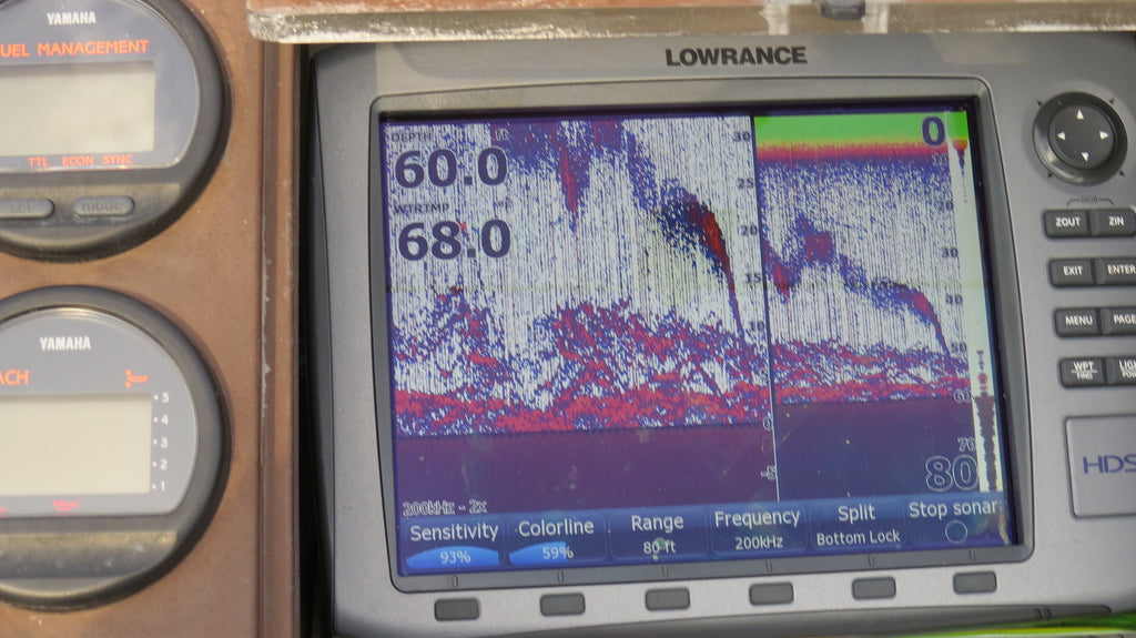 fish finder perch fishing