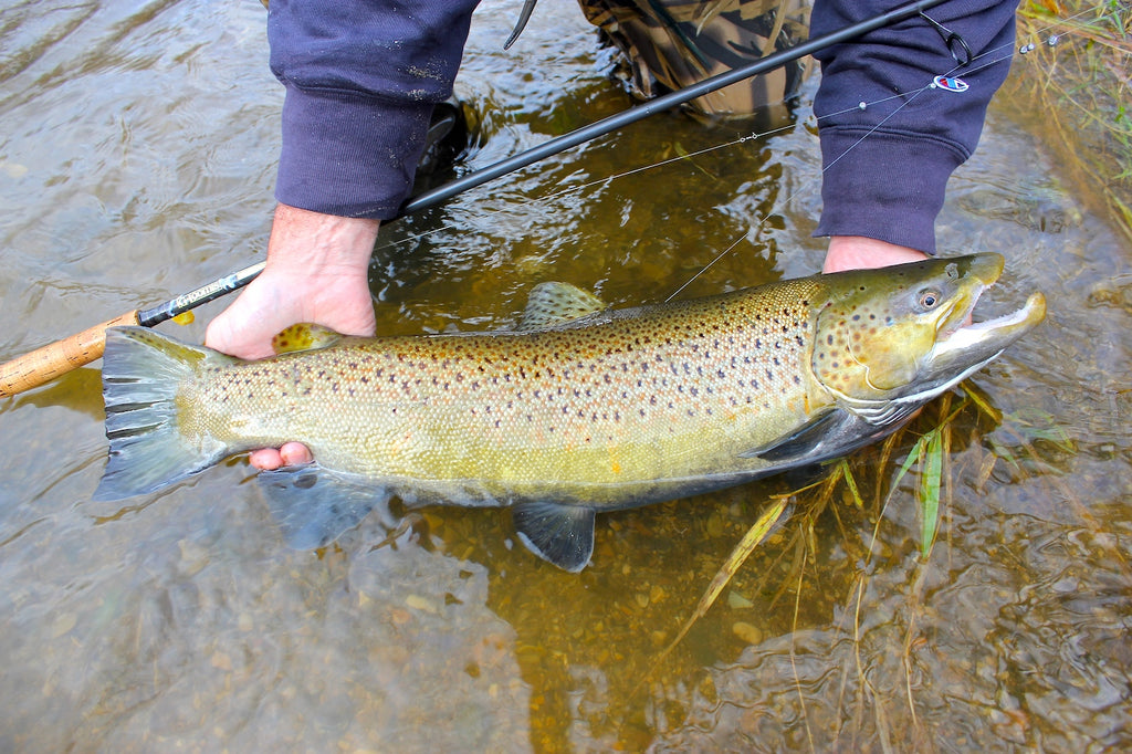 fish fishing fly trout stream creek river brown