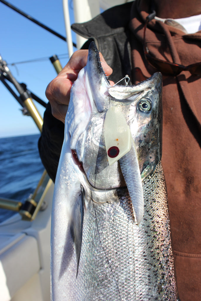 """Captain Chmura displays a king caught on a """"meat rig."""" He says, """"Anything that's working up on the shelf (less than 200 feet deep) will work downtown (over 350 feet down)."""""""
