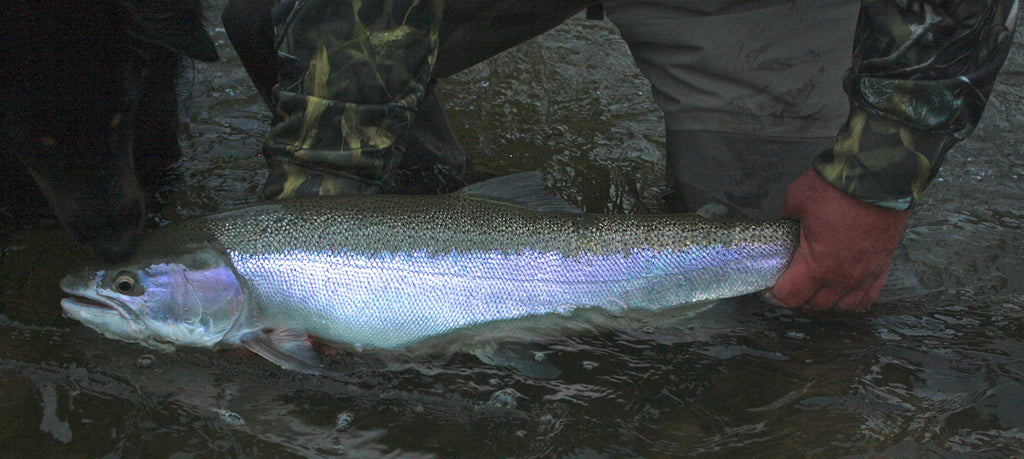 great lakes steelhead fishing