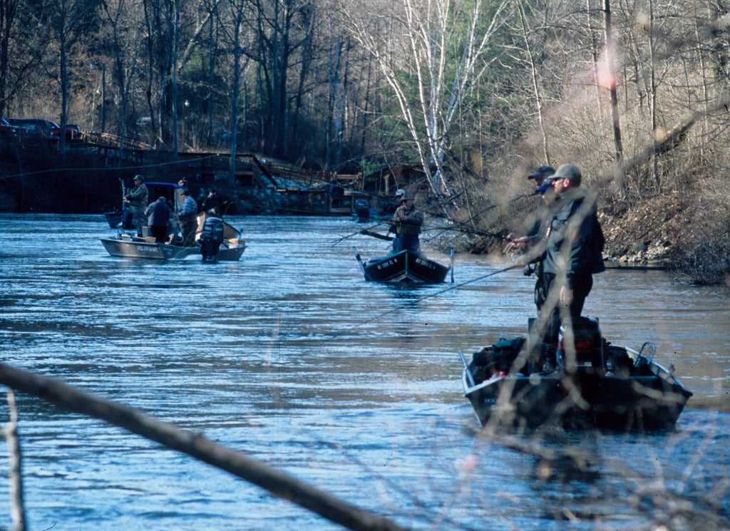 steelhead fishing manistee river
