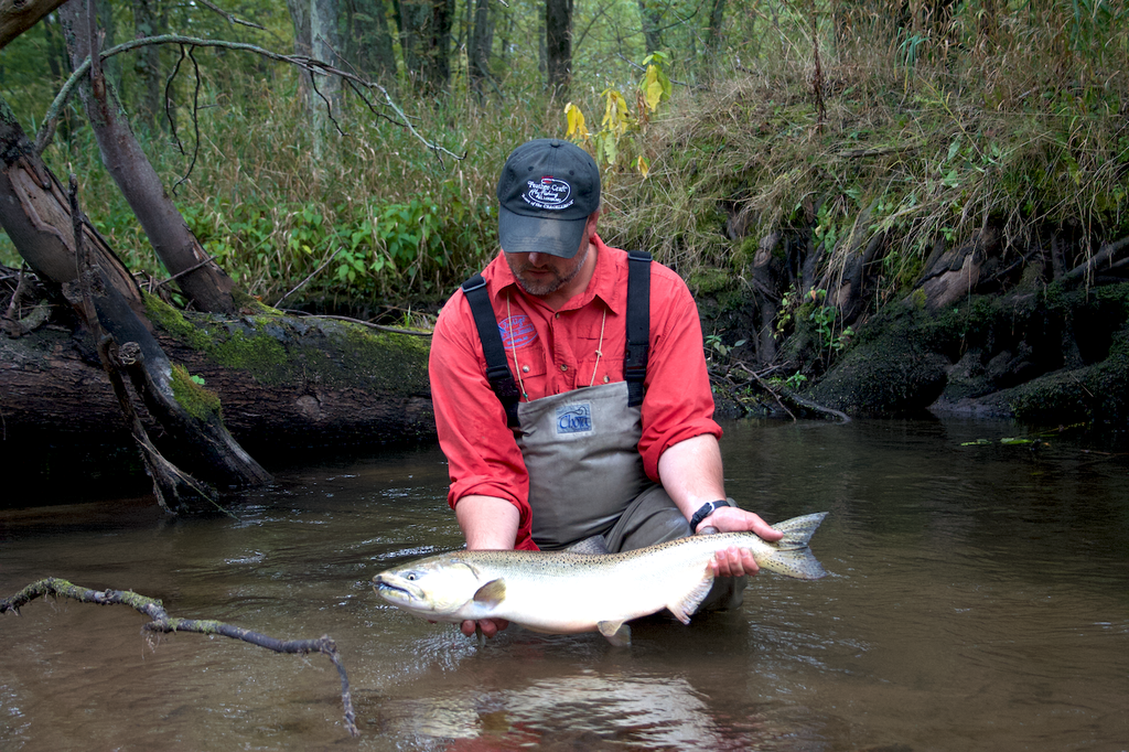 chinook salmon king great lakes tributary fishing