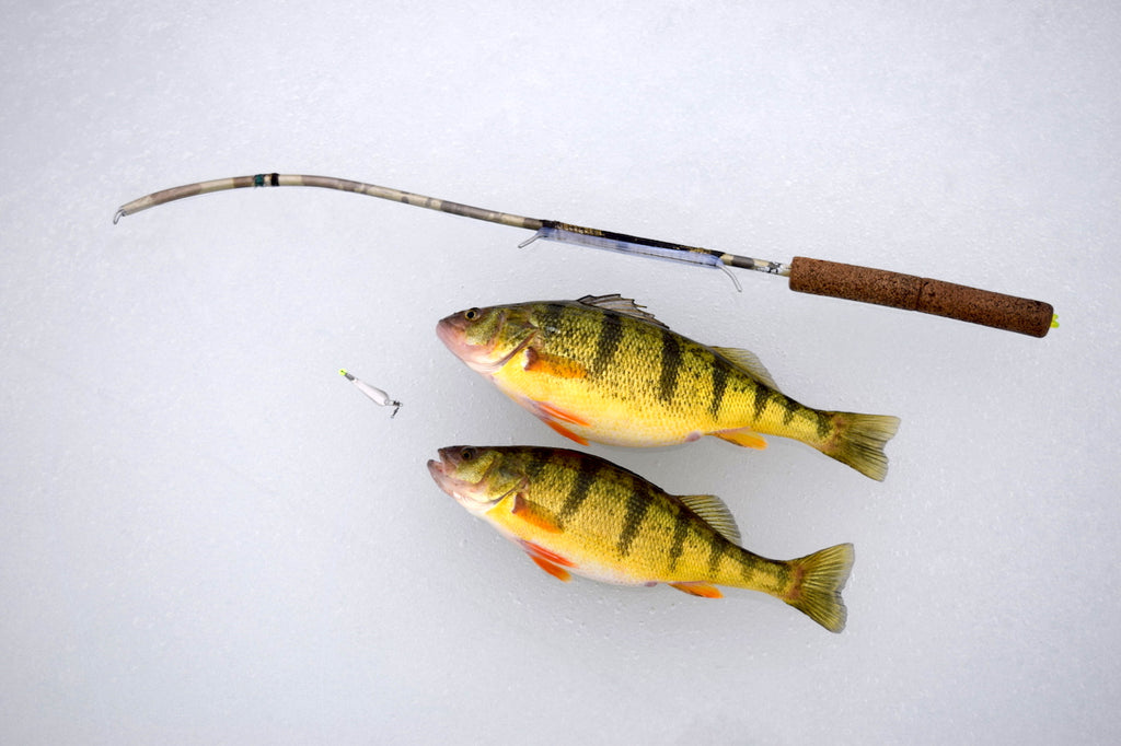 perch fishing great lakes ice