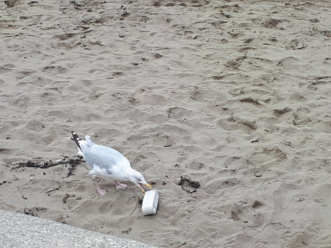 seagull eating rubbish