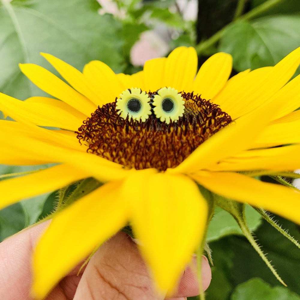 A hand is barely visible holding up a sunflower that has opened up. Sitting in the center of the flower are two R+D studs. They are shaped like sunflower blooms with black centers and detailed yellow petals all around the center.
