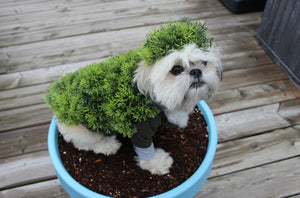 Better Than A Chia Pet – A Probiotic Pet