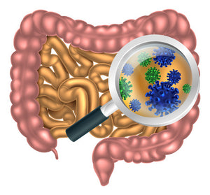 More Evidence on Probiotics for Weight Loss