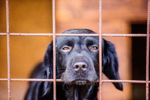 Probiotics Could Help Improve the Incidence of Diarrhea in Dog Shelters