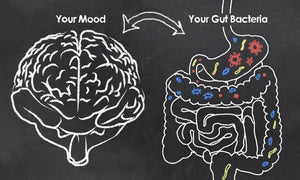 The Latest Research on the Gut-Brain Connection