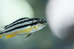 What do Zebrafish, Probiotics and Stress Have in Common? New Research!