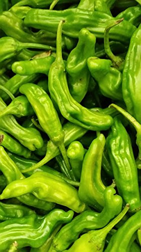 Fresh Shishito Chili Peppers 2 Lbs.
