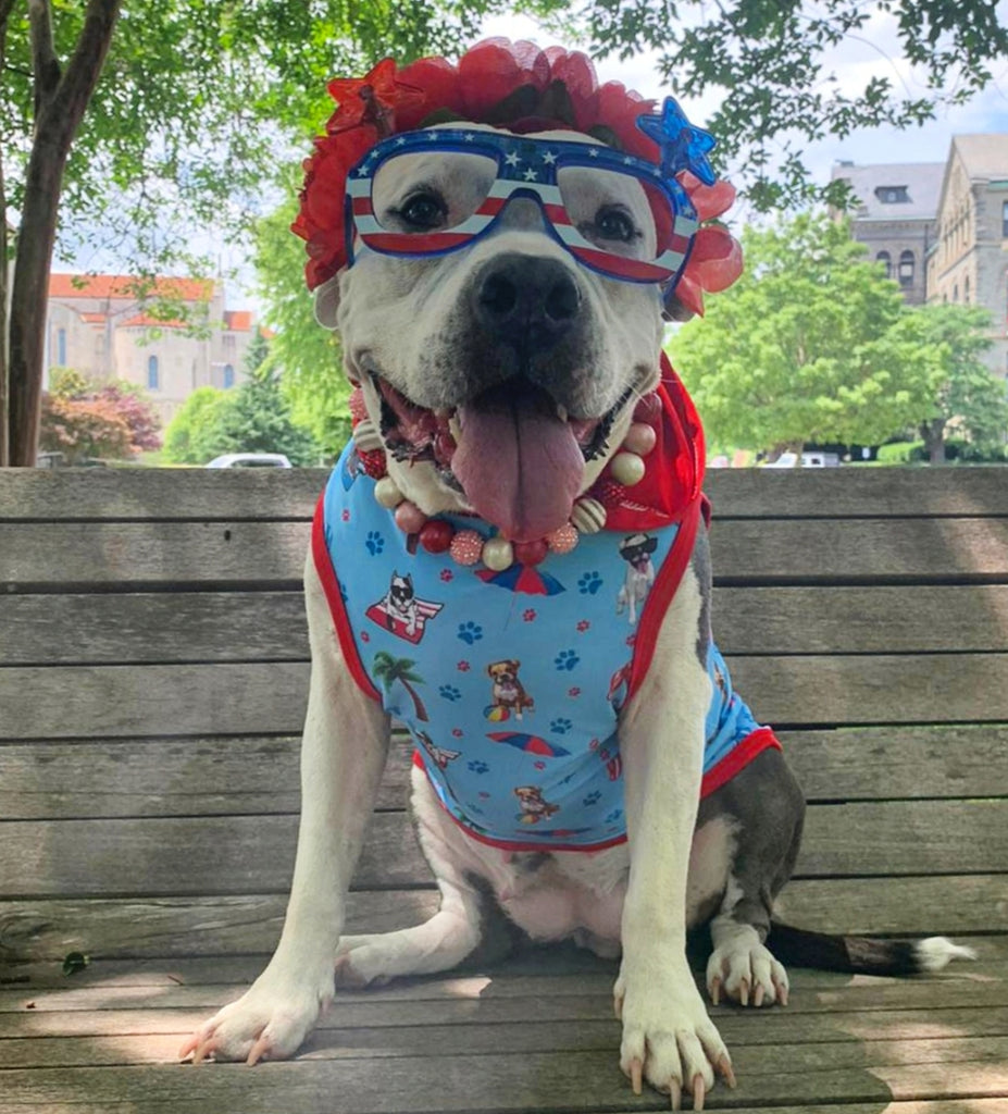 Keep Your Dogs Safe This 4th Of July Holiday