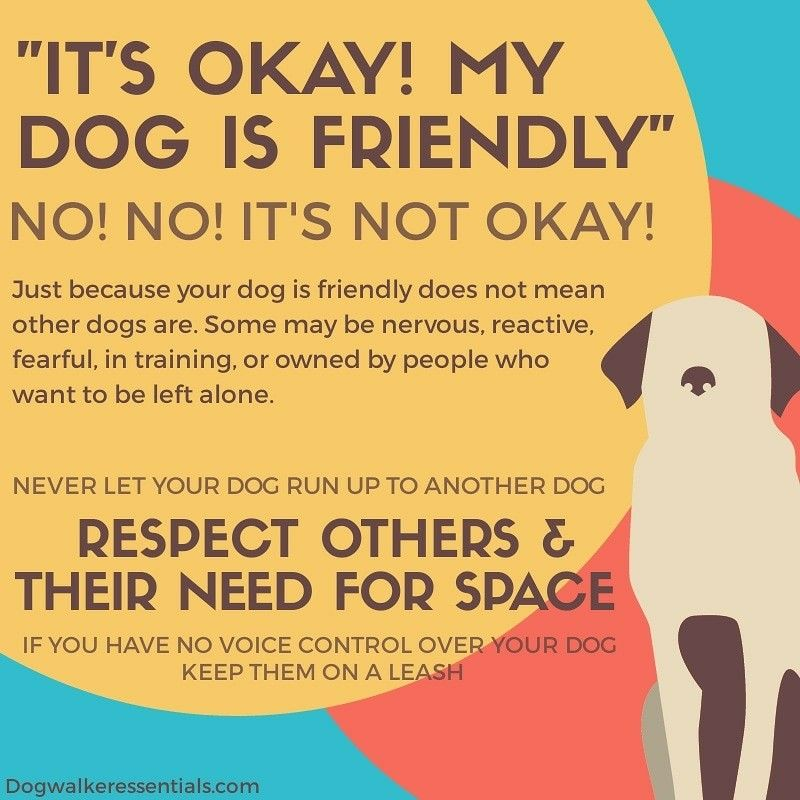 It's okay... My dog is friendly!