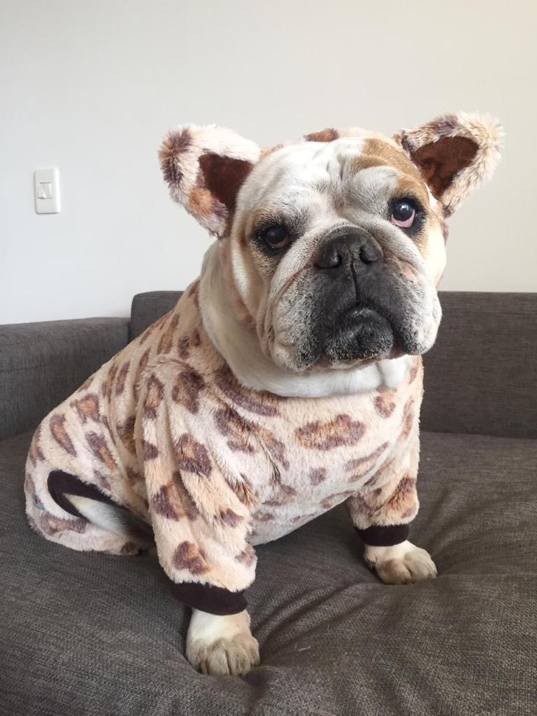 Leopard Dog Pawjama Costume