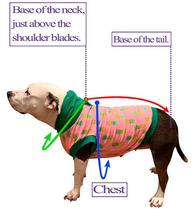 Cinco De Mayo Fiesta - PAWJama with Purple Trim/Sleeves