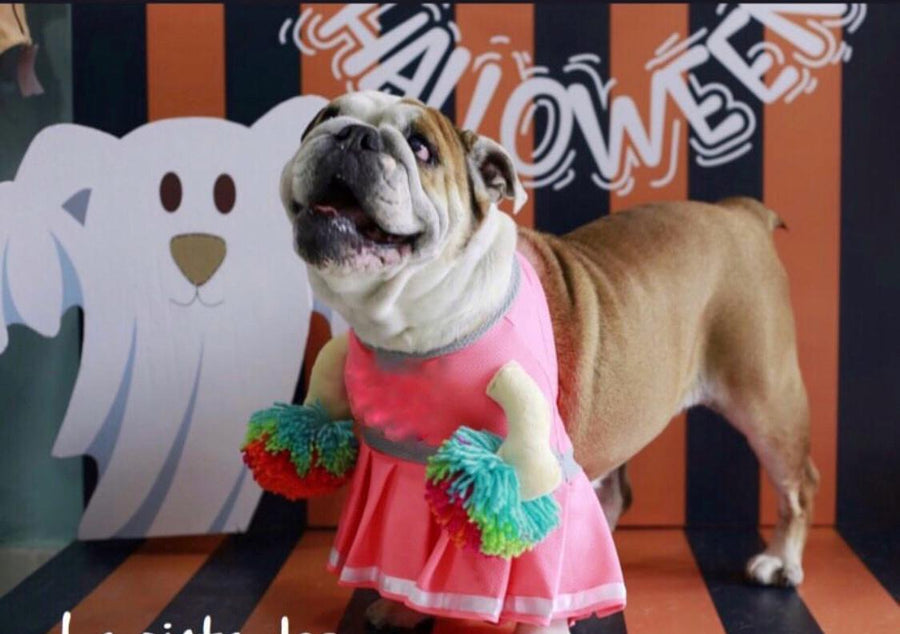 Halloween Cheerleader Dog Costume