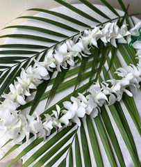 Tropical Single Lei (White)