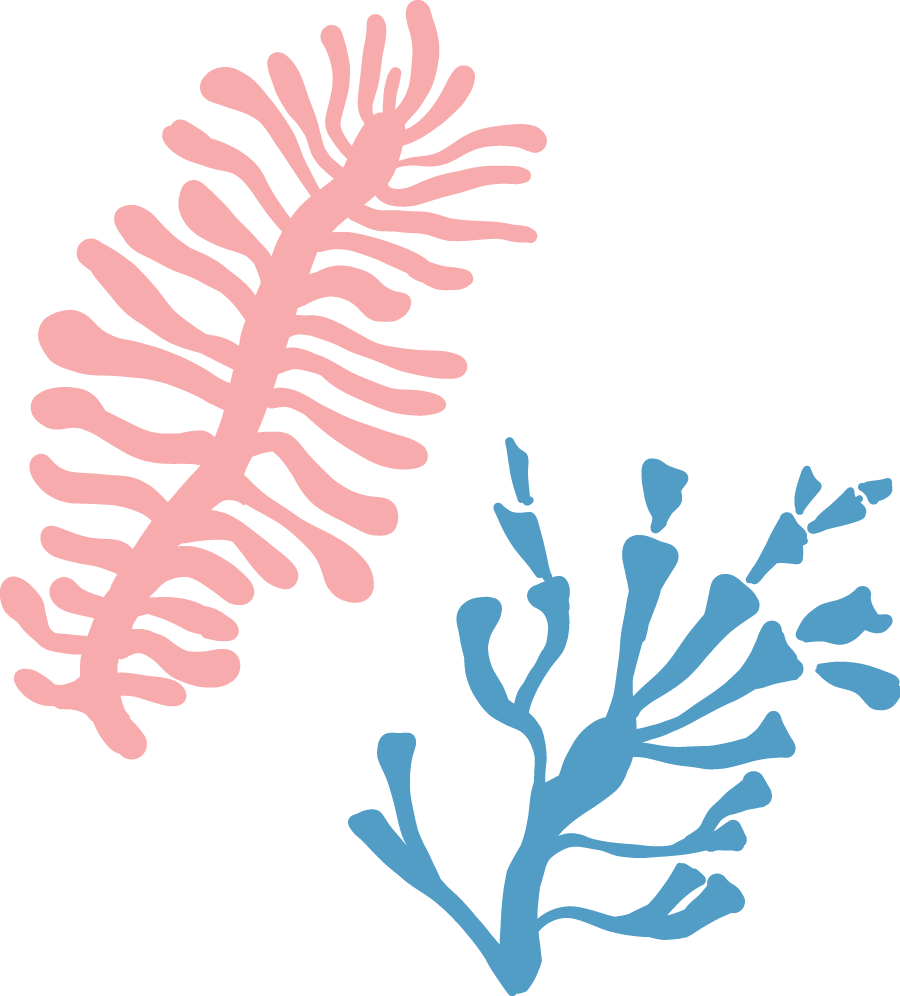 Coral Decorations