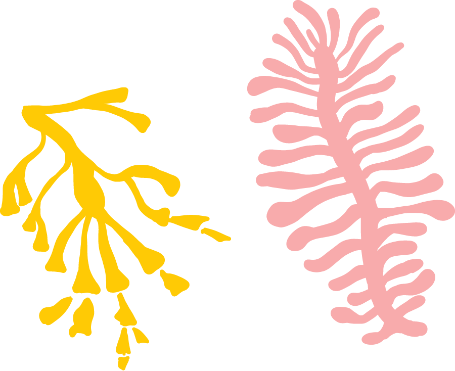 Coral Decoration