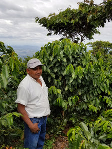 San Lorena Single Origin (El Salvador)