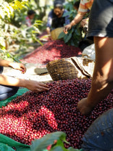 Load image into Gallery viewer, San Lorena Single Origin (El Salvador)