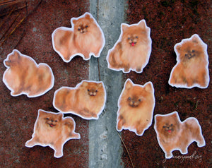 Pomeranian Stickers