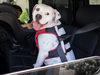 Car Safety for Your Dog