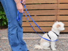 Multi-function Leash