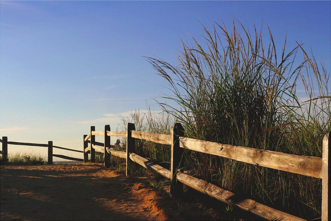 Canvas Wrap-Beach grass