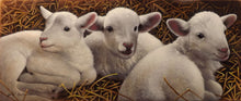 Load image into Gallery viewer, Three of a Kind - Lambs Original by Jerry Gadamus